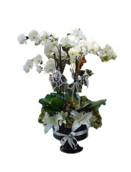 Orkidenin vip arajman